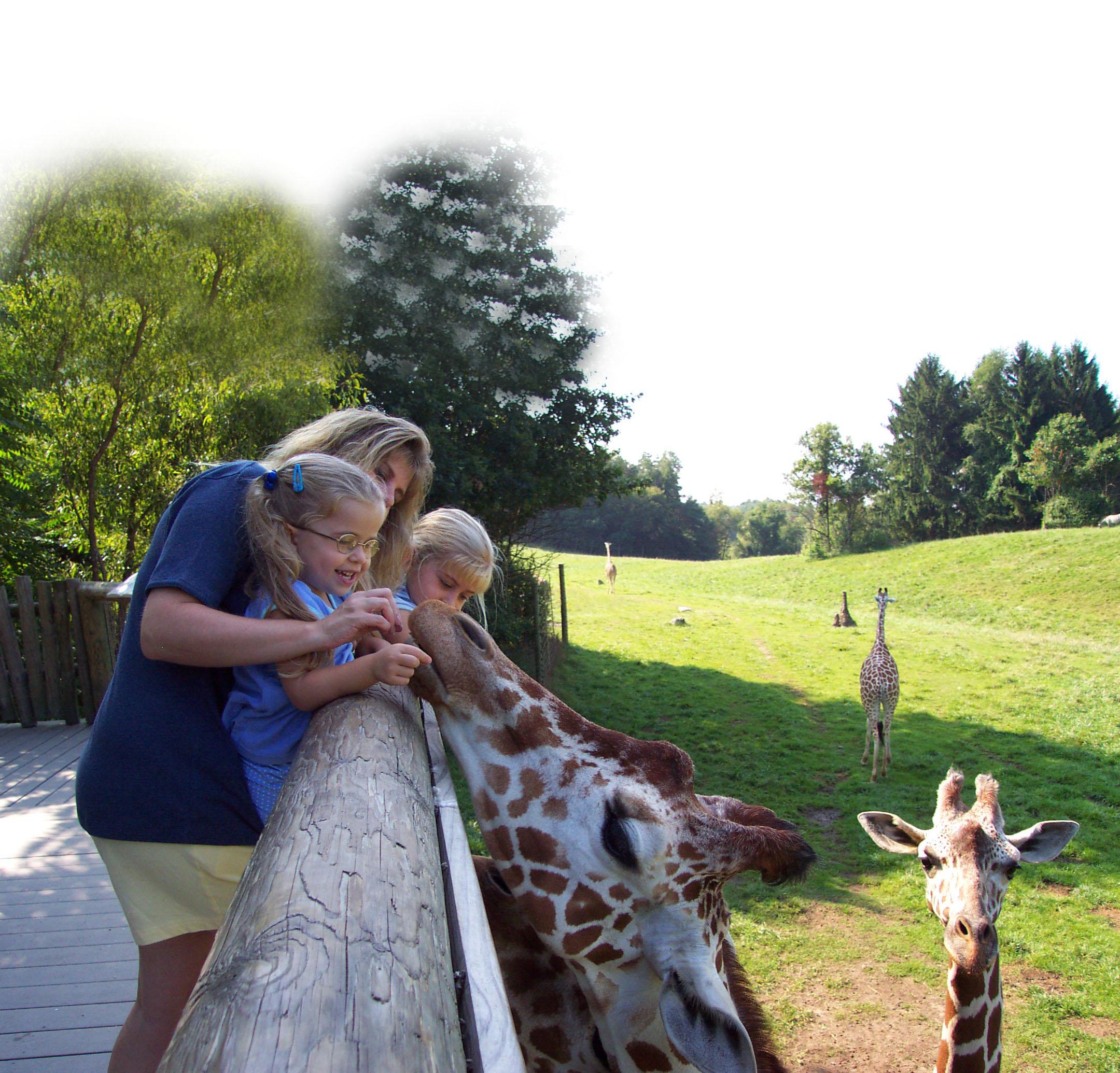 Mother&ChildFeedGiraffe2
